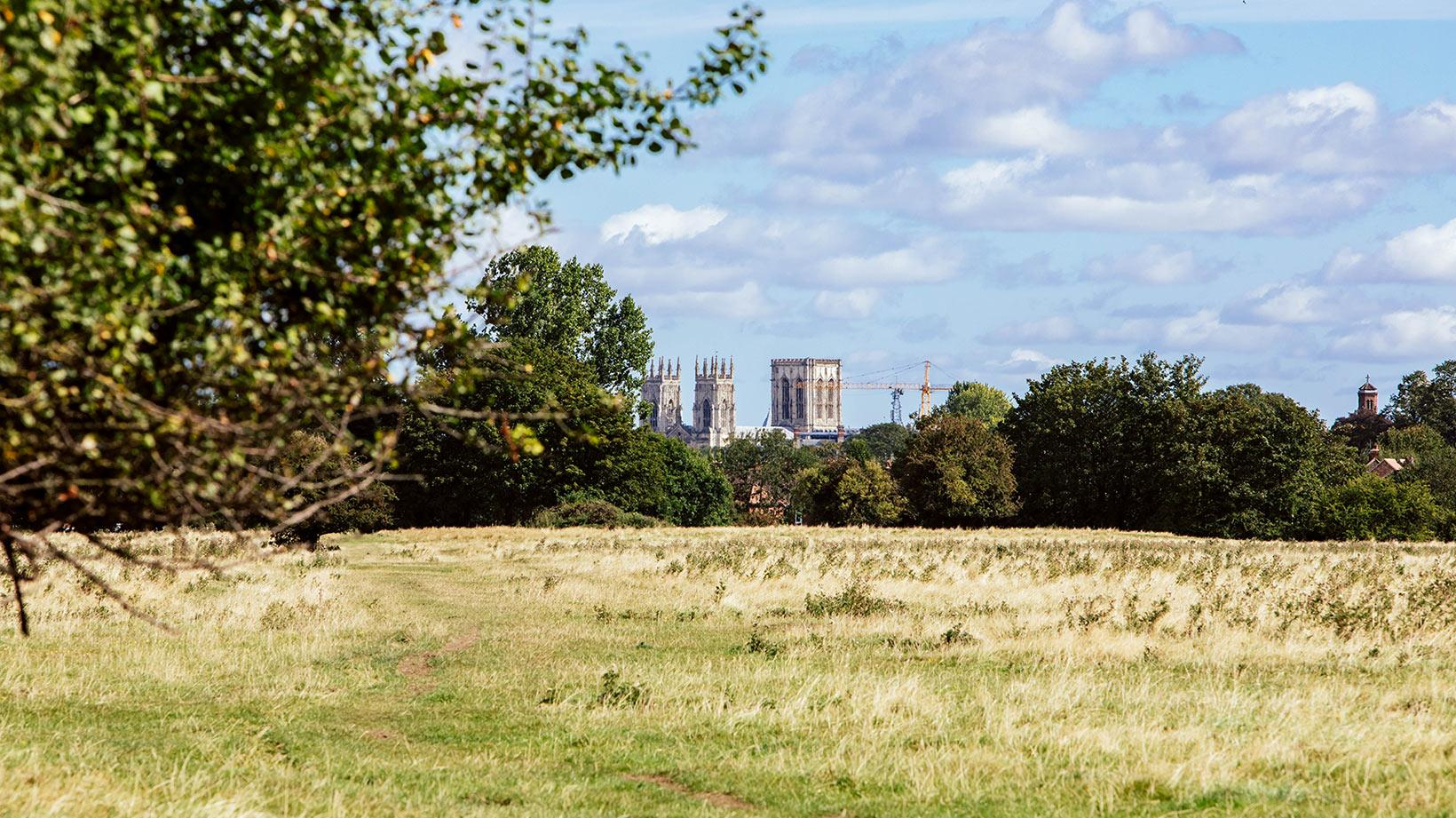 An image of a wood and a field. York cathedral can be seen in the distance.